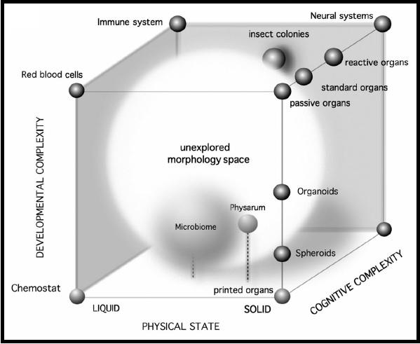 Morfoespai dissenyat per Laboratori de Sistemes Complexos UPF