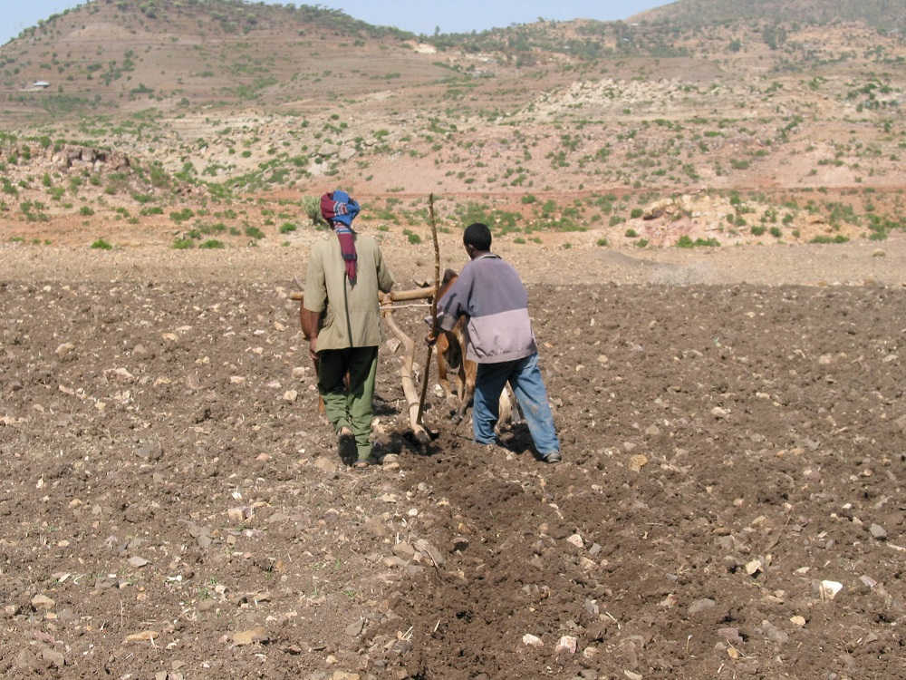 Example of land use for agriculture - Preparation of fields through traditional plowing in the area of Aksum, Ethiopia. PHOTO: Marco Madella