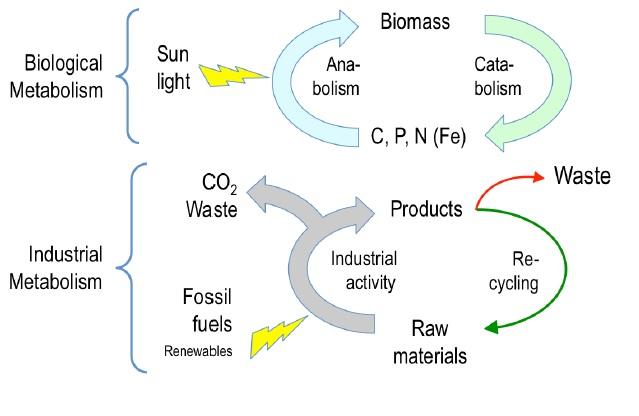 Metabolisme biològic versus metabolisme industrial